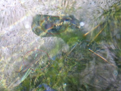 Tritóns na Fonte de Sete Camiños.