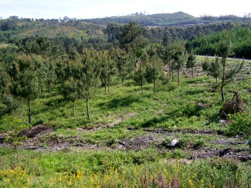Traballo de recuperación do monte veciñal na Comunidade de Salcedo.