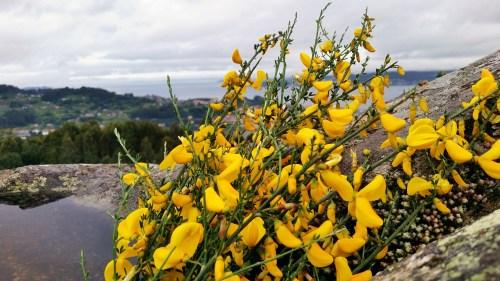 Maio no Monte Pituco.
