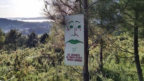AS ÁRBORES do MONTE PITUCO tamén choran!