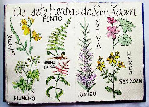 Herbas de San Xoán.