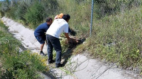 Xornada de erradicación da herba da Pampa, con Vaipolorío.