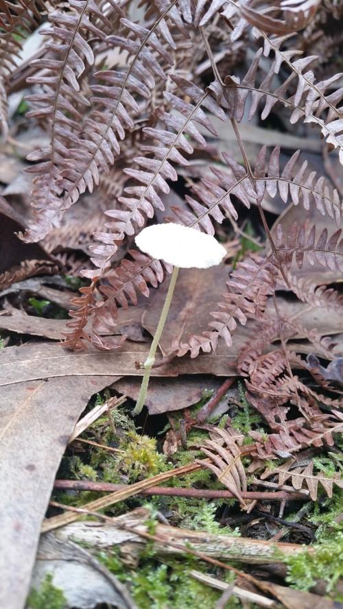 Fungos de Tambo