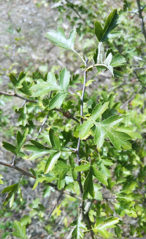 Flora de Tambo