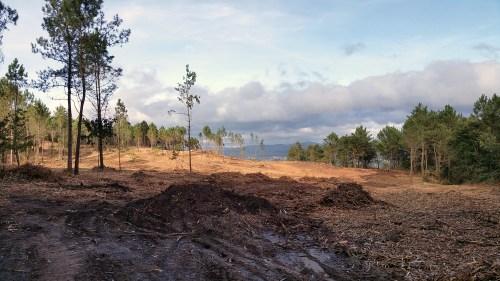 Eliminación de acacia no monte de Salcedo.
