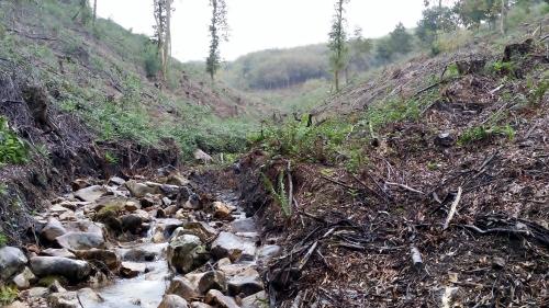 Zona na que a Comunidade de Montes de Moaña retirou acacia.