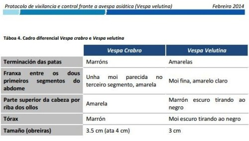Características da Vespa Velutina