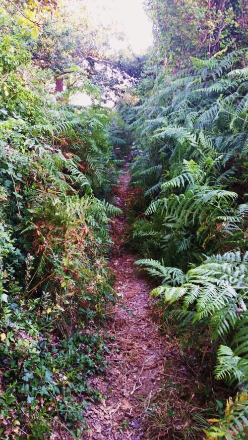 Camiño de acceso ao castro da Subidá