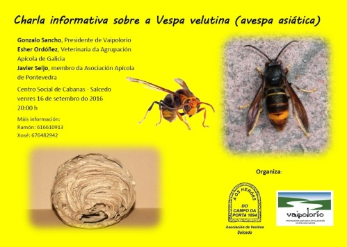 Vaipolorío: charla sobre vespa velutina