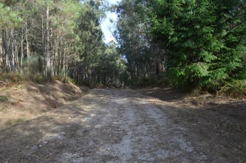 Desbroce das marxes da pista forestal do Pituco.