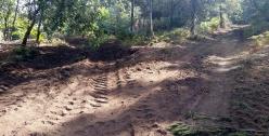 As Regueiras, onde atopamos unha tala de piñeiros no medio do souto.