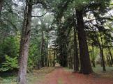 Bosque de sequoias na Finca de Massó (foto, Paulo Troitiño).