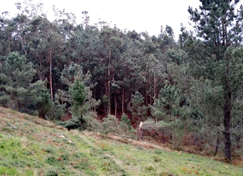 Efectos das borrascas Kurt e Leiv no Monte Pituco