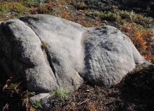Novos gravados descubertos na Carrasca: forma reticular