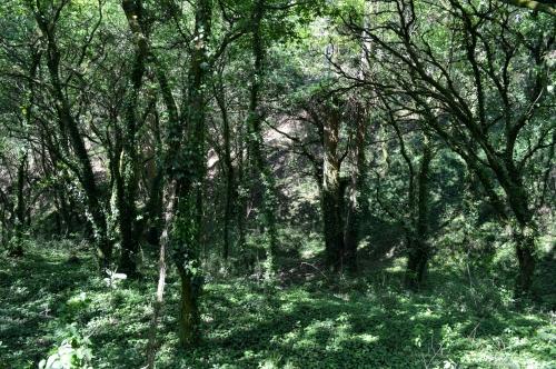 Ruta pola protección dos montes de Cobres, en Vilaboa