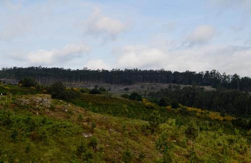 Vista dos traballos de recuperación do monte veciñal de Salcedo