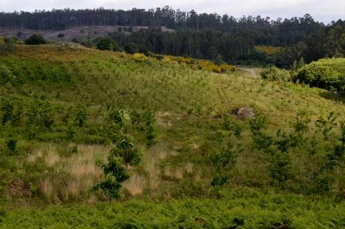 Vista do souto dende o novo miradoiro construído pola Comunidade de Salcedo