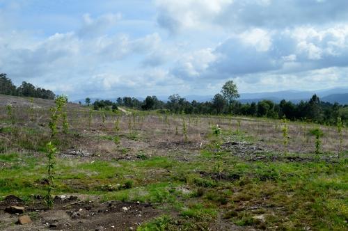 Visita a un dos espazos rexenerados, antigamente cheo de acacias