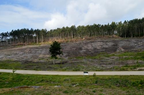 Terreo recuperado con novas plantacións; antes, inzado de acacias.