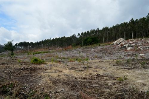 Zona onde se vai instalar a futura aldea etno-neolítica