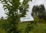 Tratamento fitosanitario contra unha praga que afecta oscastiñeiros