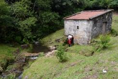 Muíño de Pereira