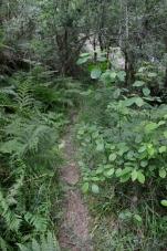 Andaina polos montes de Vilaboa coa Plataforma Montes do Morrazo