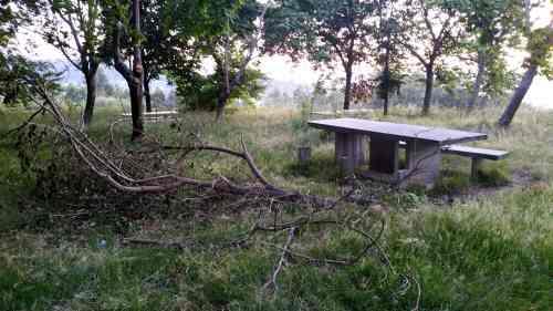 Estado da arboreda a carón do Pituco (xuño 2017)