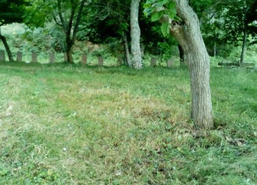 Arboreda do Pituco tralo desbroce realizado por Queremos Galego Marín (xuño 2017).