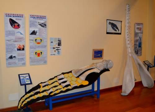 Museo da SGHN en Ferrol