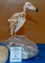 Museo da SGHN, en Ferrol