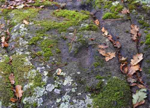 Petroglifos da Graña