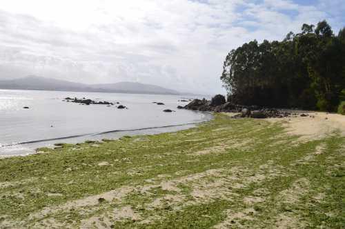 Praia do Niño do Corvo, Tirán (Moaña)