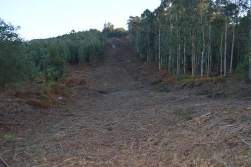 Corta de eucalipto na veciña comunidade de Salcedo, cos restos triturados cubrindo o solo.