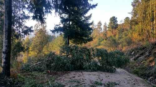 "Efectos do paso do temporal ""Ana"" no Monte Pituco"