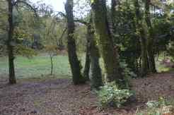 Carballos e castiñeiros, mostras da arboreda autóctona aínda presente no rural marinense