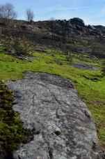 Petroglifos de Amoedo: Chan da Pía