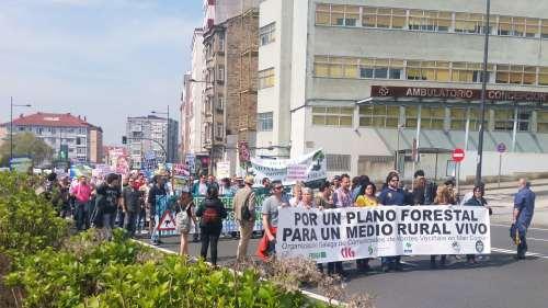 Manifestación Por un Plano Forestal: Compostela, abril 2018
