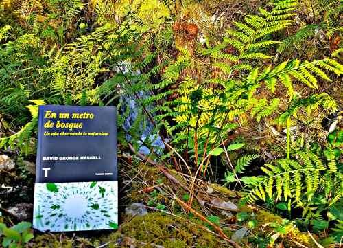 """""""En un metro de bosque"""" (Turner)"""