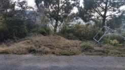 Desbroce na pista do lado de Pinal de Caeiro