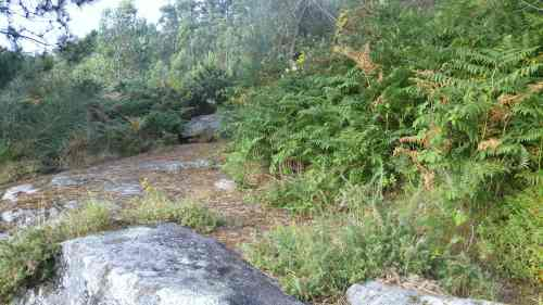 Estado do xacemento de Pinal de Caeiro a finais de xullo