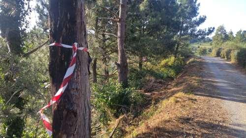 Desbroce da Comunidade de Montes de San Xián en Pinal de Caeiro