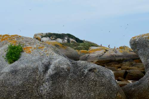 Visitas en zona restrinxida, baixo unha bandada de aves alteradas
