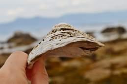 Moluscos de Areoso