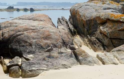Pousadoiro de tres polos de gaivota