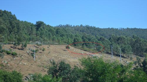 Vista da área desbrozada en Pinal de Caeiro