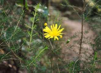 Flora do sendeiro do río Belelle, Neda