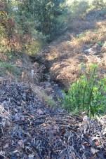 Os restos das pólas e da follaxe dos eucaliptos quedaron machacados no chan