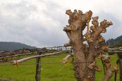 Actividade agrícola na parroquia da Moreira