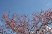 Flora de Salcedo